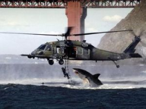 shark_helicopter_q